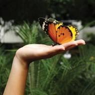 Свидание в доме бабочек