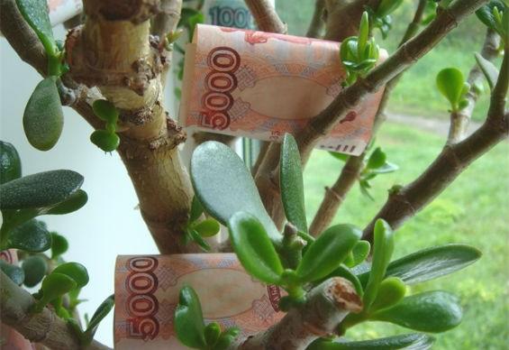 Денежное дерево с банкнотами