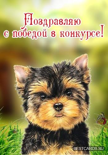 """Виртуальная открытка для форума """"Поздравляю с победой в конкурсе!"""" с милым щенком"""