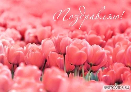 """Виртуальная открытка для форума """"Поздравляю!"""" с тюльпанами"""