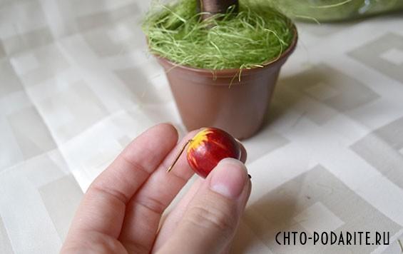 В раствор прикрепляем яблоко