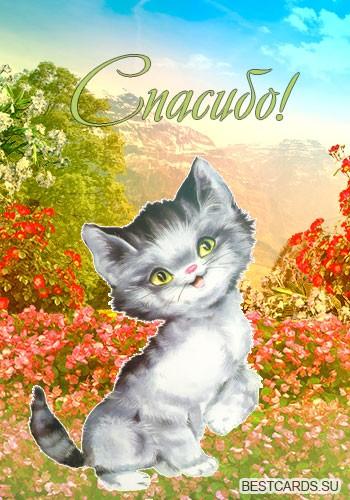 """Виртуальная открытка для форума с надписью """"Спасибо!"""" и котёнком"""