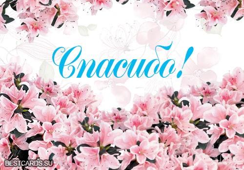 """Виртуальная открытка для форума со словом""""Спасибо!"""" и цветами"""