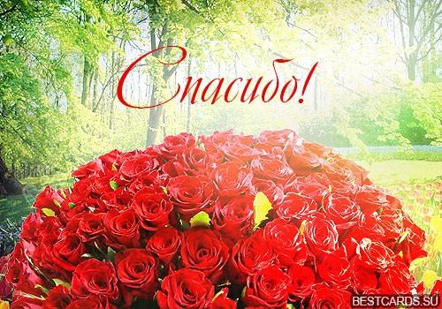 """Виртуальная открытка для форума """"Спасибо!"""" с букетом роз"""