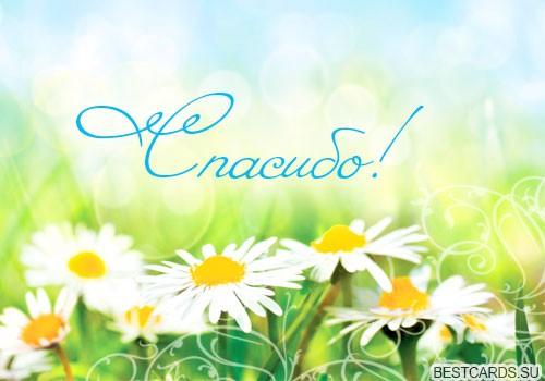 http://chto-podarite.ru/wp-content/uploads/2014/06/otkrytka-dlya-foruma-spasibo-s-romashkami.jpg