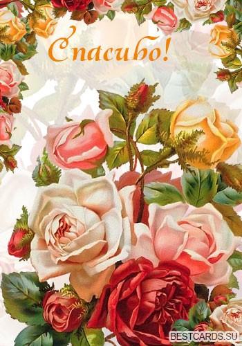 """Виртуальная открытка для форума """"Спасибо!"""" с розами"""