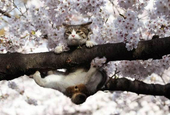 Кот подтягивается