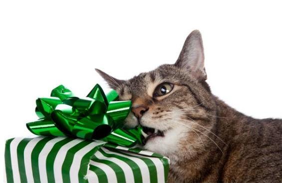Идеи подарков для кошки