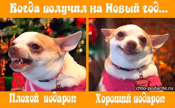 Что можно дарить на год Собаки