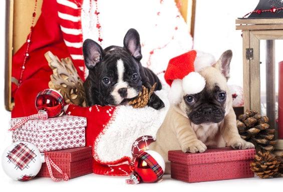Что нельзя дарить на год Собаки