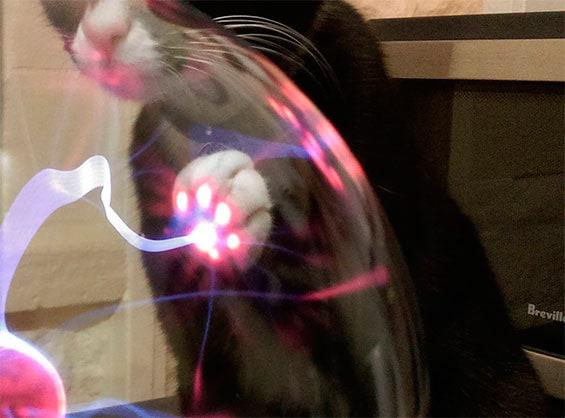 плазменный светильник и кот