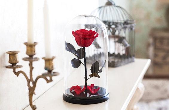 Красная роза в колбе