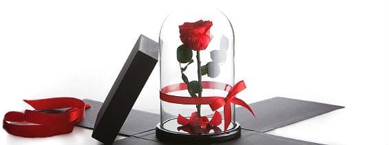 роза в колбе в подарок
