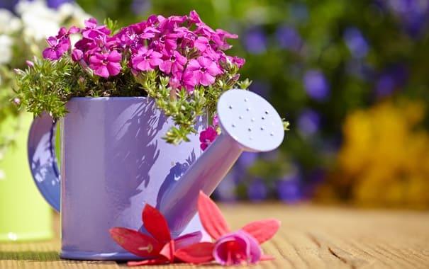 Лейка для полива и цветы